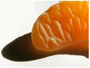 brain-mandarin_orange-fruit-petal-individual-flickr