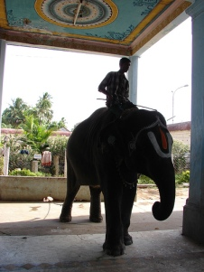 temple-elephant-sundar-venkatesh-story-hero