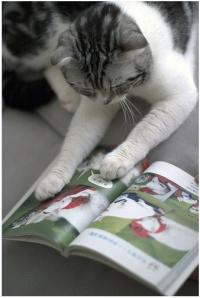 cats-read-books-language-books-images-photos-flickr-paul-ngan