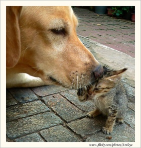 Araleya-Cats-Dogs-Lick-Flickr-Images-Clean