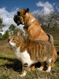 vivetmart_Flickr-Yokviv_Photos-Cats-Dogs-Bulldog