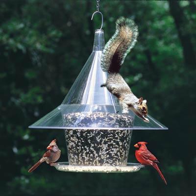 Squirrel_Eating_Bird_Feeder
