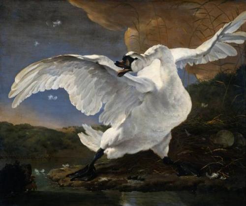 Swan_Celtic_Irish_Goddess_aengus_Mythology_Strory_Paintings_Art